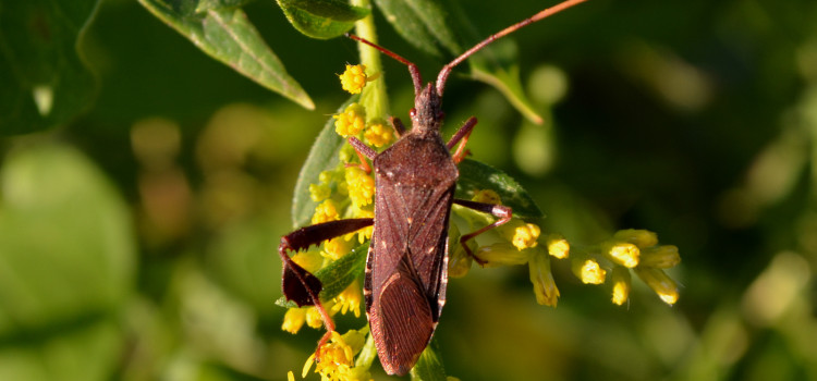 The Other Stink Bug