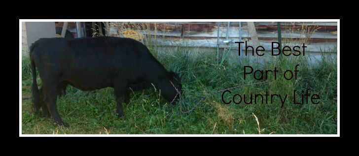 Guest Post: The Best Part of Country Living